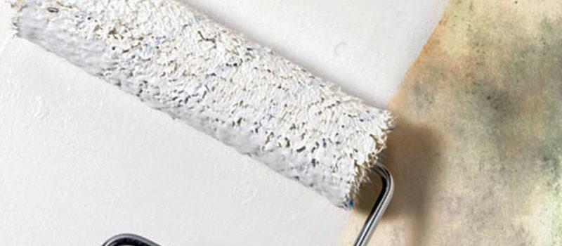 pintando una pared con moho