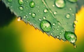 Las plantas producen humedad ambiental